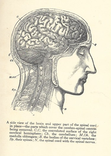 SCAN Brain